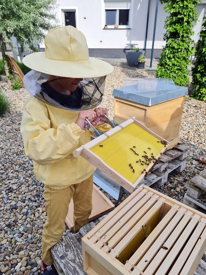 Projekt Bienen